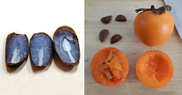 Le posate nei semi di cachi prevedono come sarà l'inverno lo sapevi?